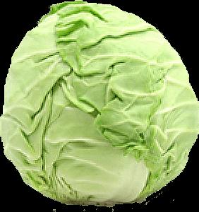 Bắp cải